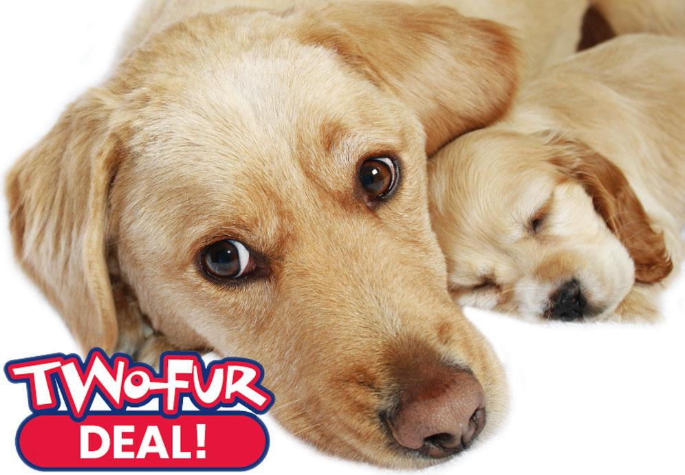 Aiello-Home-Services-Two-Fur-Deal-2019